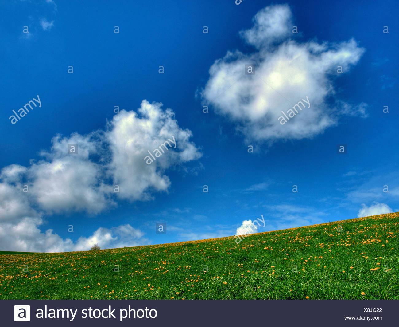 Escenografía, diente de león, la naturaleza, el formato horizontal, el día, la pradera, las nubes, el claustro Gubel, Suiza, en el cantón de Zug, resorte Imagen De Stock