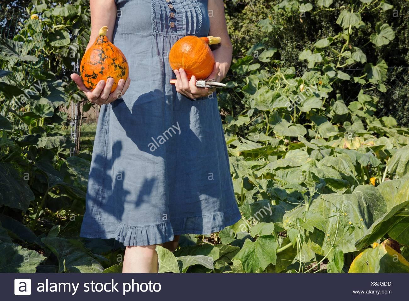 Mujer madura, la jardinería, la celebración de los zapallos de jardín, sección intermedia Foto de stock