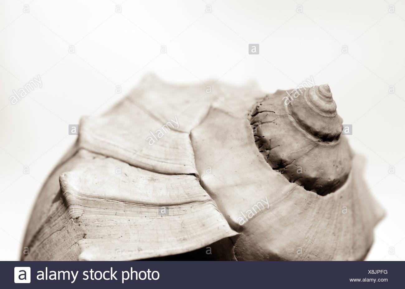 Conchas de moluscos Imagen De Stock