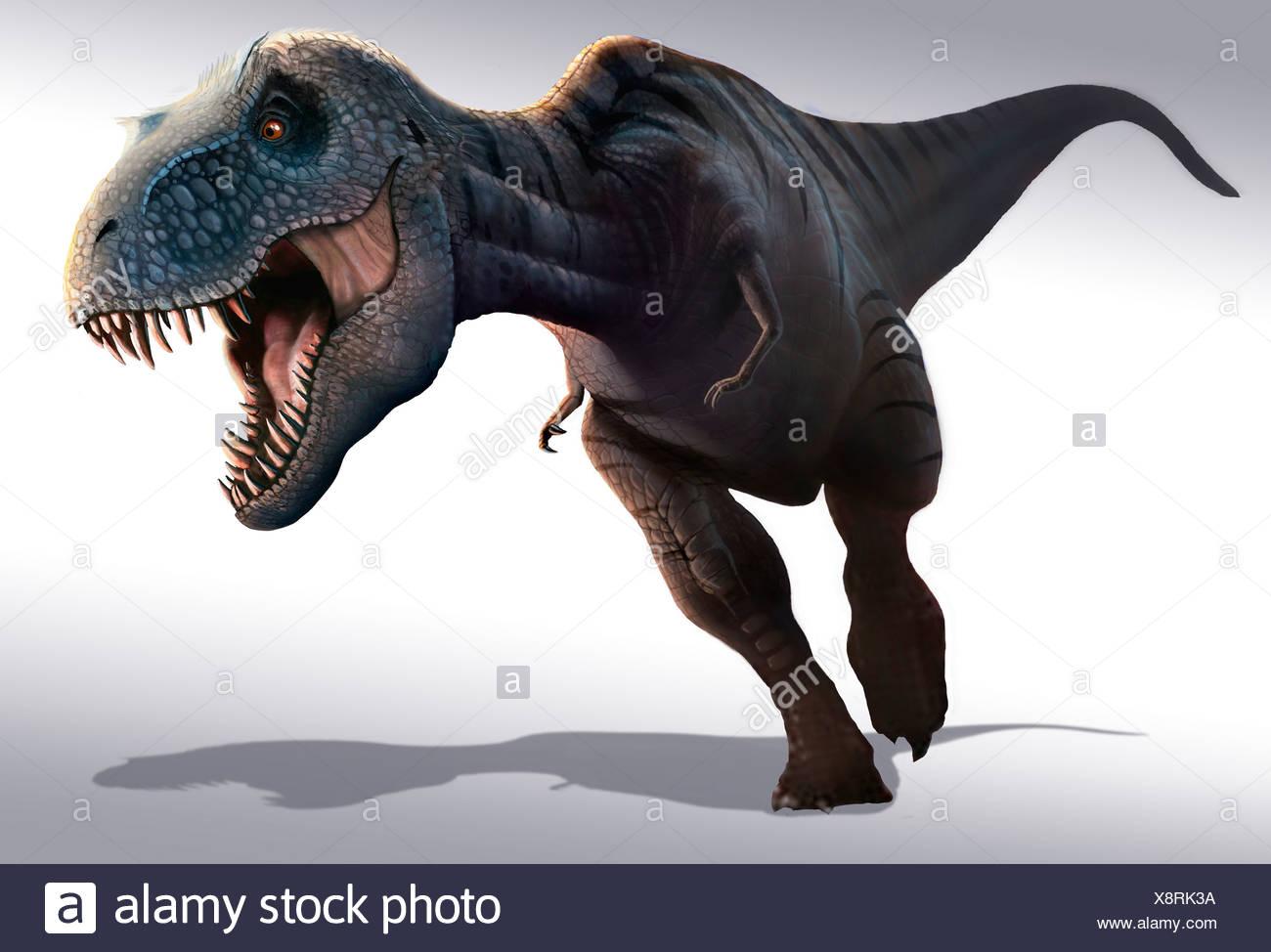 Tyrannosaurus Rex Es Posiblemente El Mas Famoso De Todos Los Dinosaurios Que Vivieron Durante Los Ultimos 5 Millones De Anos Del Periodo Cretaceo Fotografia De Stock Alamy La palabra dinosaurio significa «lagarto terrible»… a pesar de que estos animales prehistóricos tenían una apariencia impactante, lo cierto es que sabiendo que están extinguidos y disfrutando de las. https www alamy es tyrannosaurus rex es posiblemente el mas famoso de todos los dinosaurios que vivieron durante los ultimos 5 millones de anos del periodo cretaceo image280803022 html