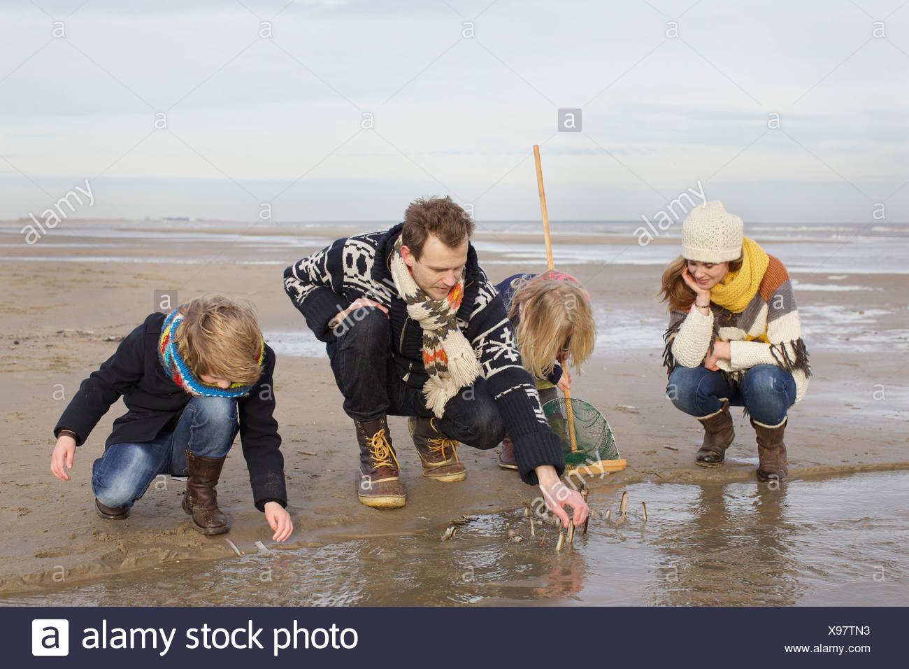 Mid padres adultos con hijo e hija buscando conchas en la playa, Bloemendaal aan Zee, Holanda Imagen De Stock