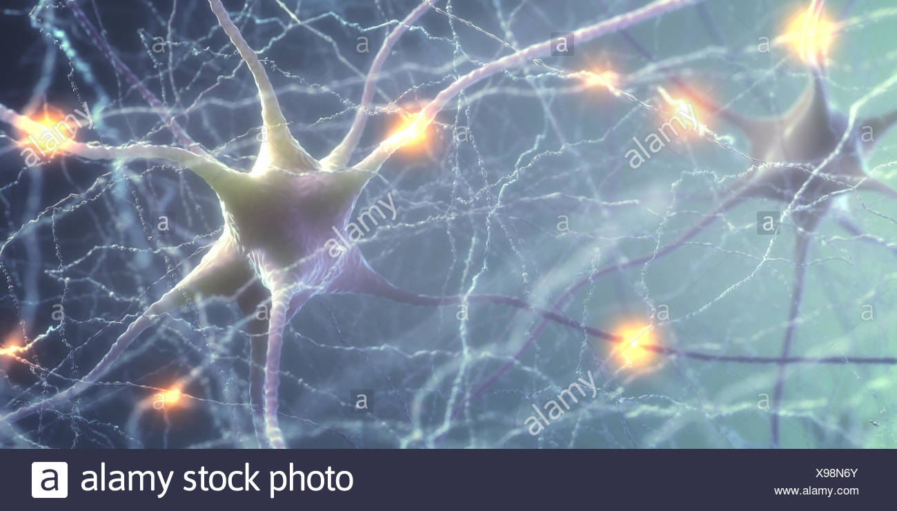 Las células nerviosas del cerebro humano, la ilustración. Foto de stock