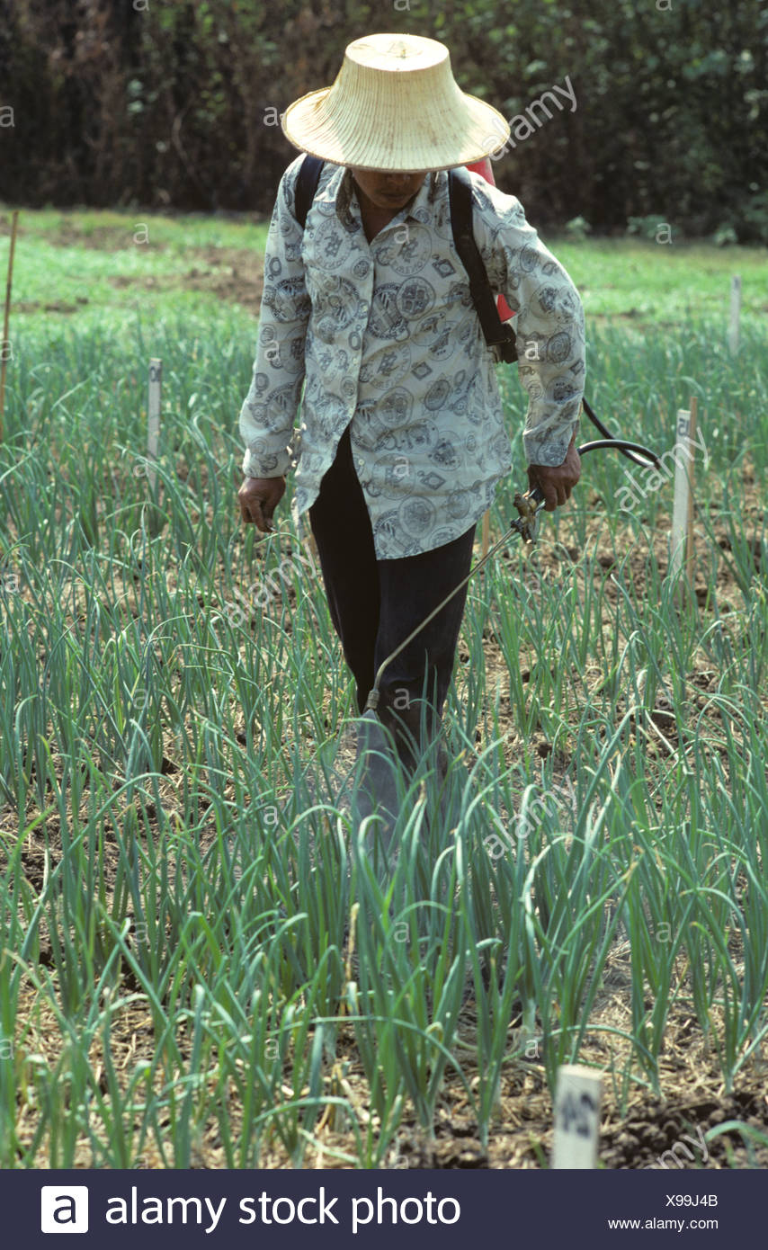 Hombre Fungicida Para Cebolla De Rociando Ensayos Parcelas Tailandés rqa8Ar