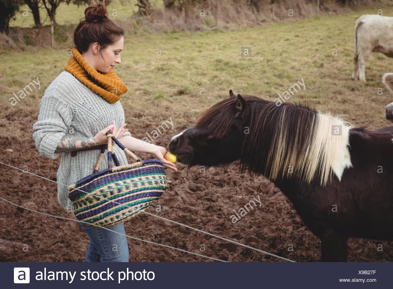 Mujer con cesta alimentar un caballo en el campo Foto de stock