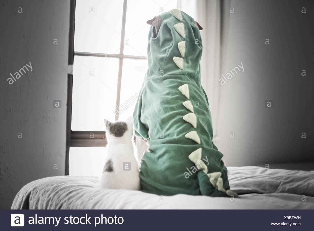 Shar Pei en traje de dinosaurio y gatito mirando a través de la ventana Imagen De Stock