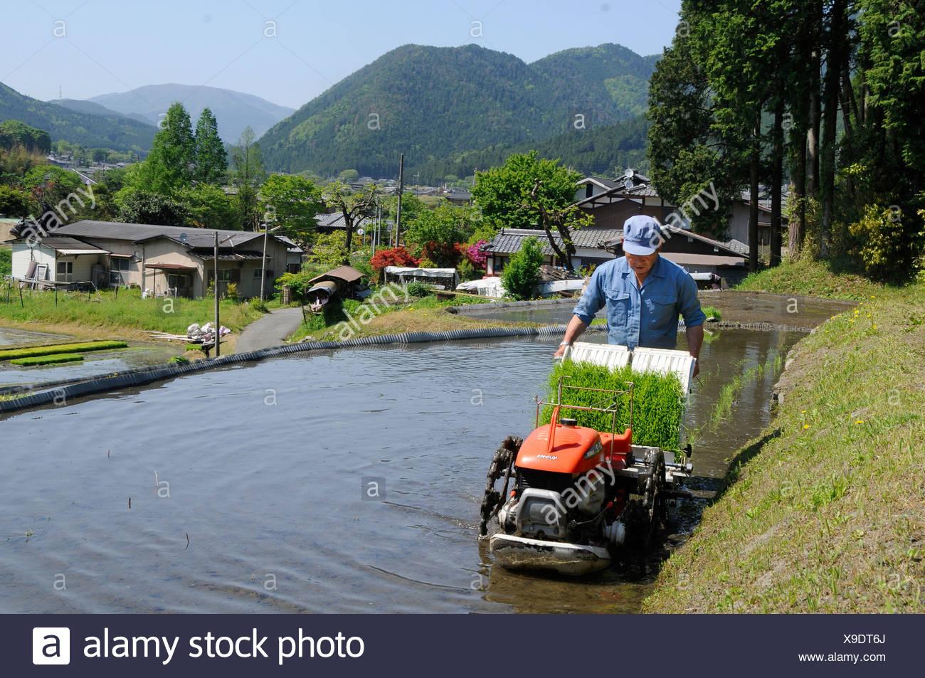 Cultivador de arroz japonés con una plantación de arroz de la máquina en una terraza de arroz inundado en Ohara, cerca de Kyoto, Japón, Asia Foto de stock