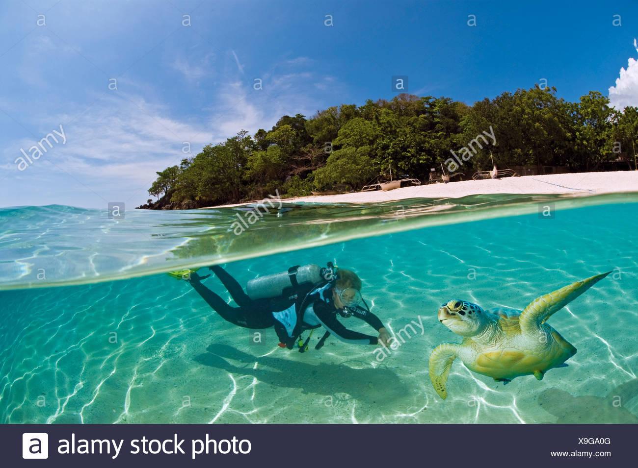 Buzo femenino con una tortuga en las aguas poco profundas fuera de una isla, dimakya island, Palawan, Filipinas, Océano Pacífico Foto de stock
