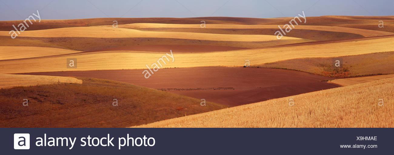 Campos de contorno con franjas de tierra arada y cortar el grano se muestran con un cielo azul en el fondo; Palouse, Washington, Estados Unidos de América Imagen De Stock