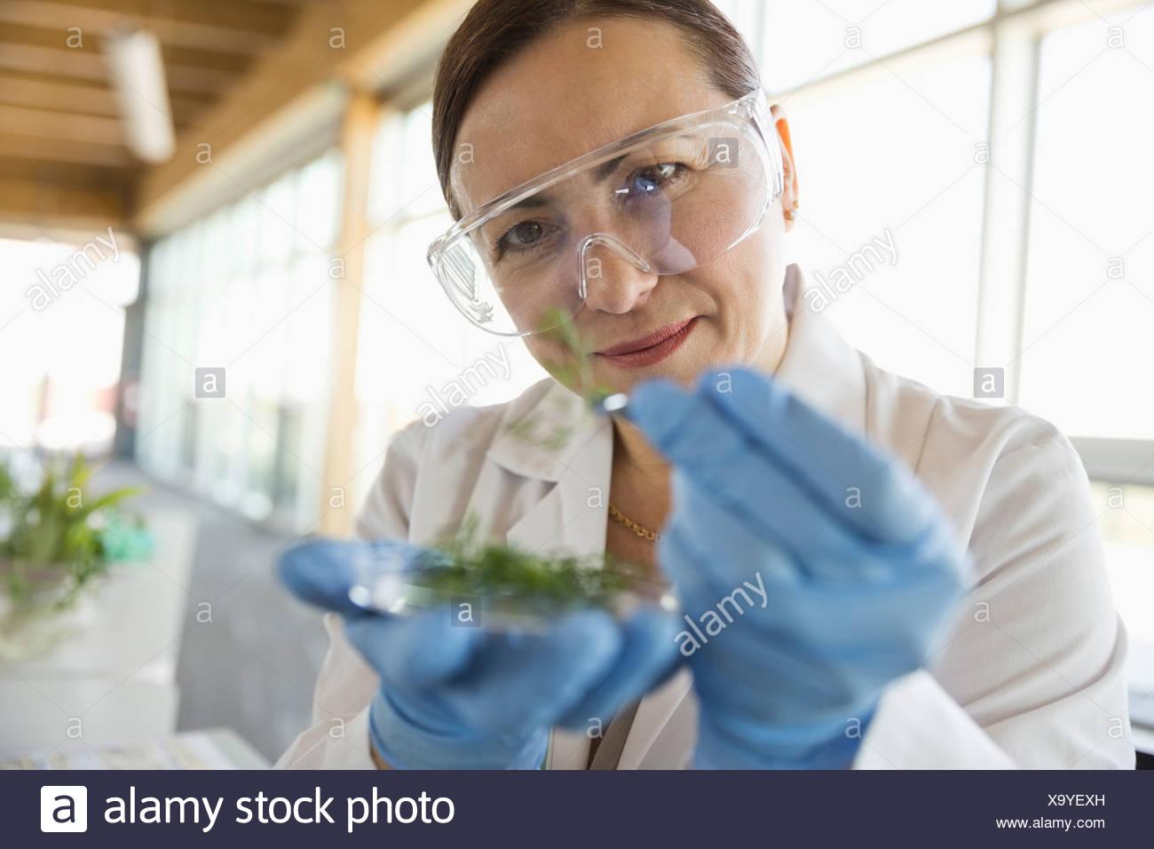 Botánico hembra examinar muestras de plantas Imagen De Stock