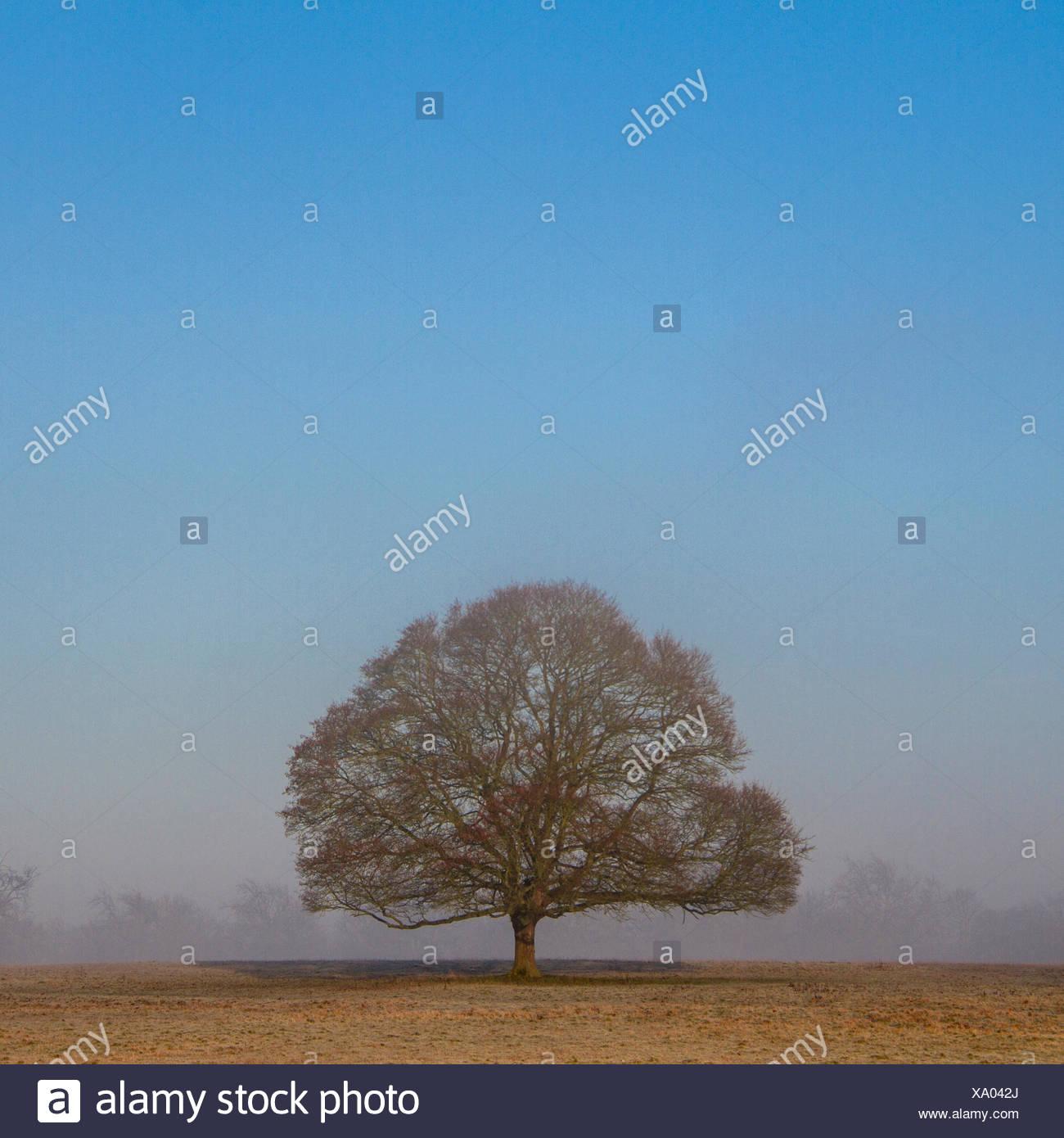 Lone Tree en un campo Imagen De Stock