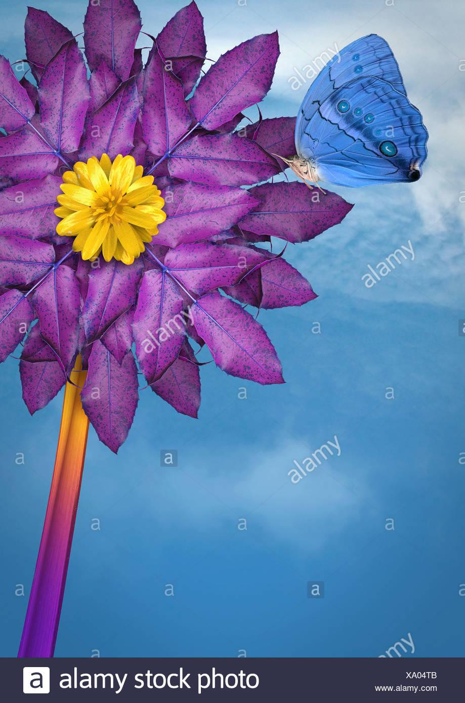 Cerca de butterfly aterrizar en flor Imagen De Stock