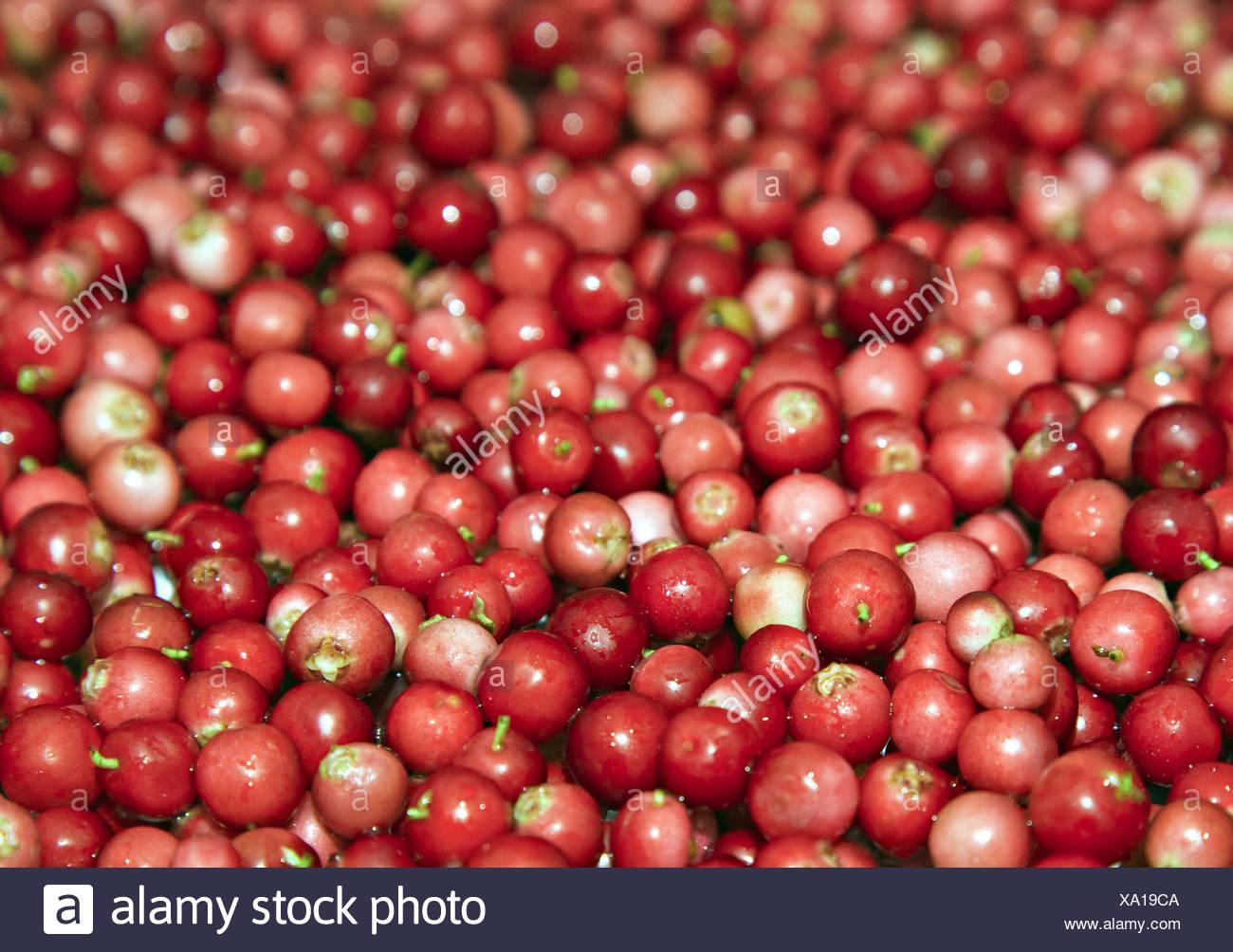 Montón de cowberry Imagen De Stock