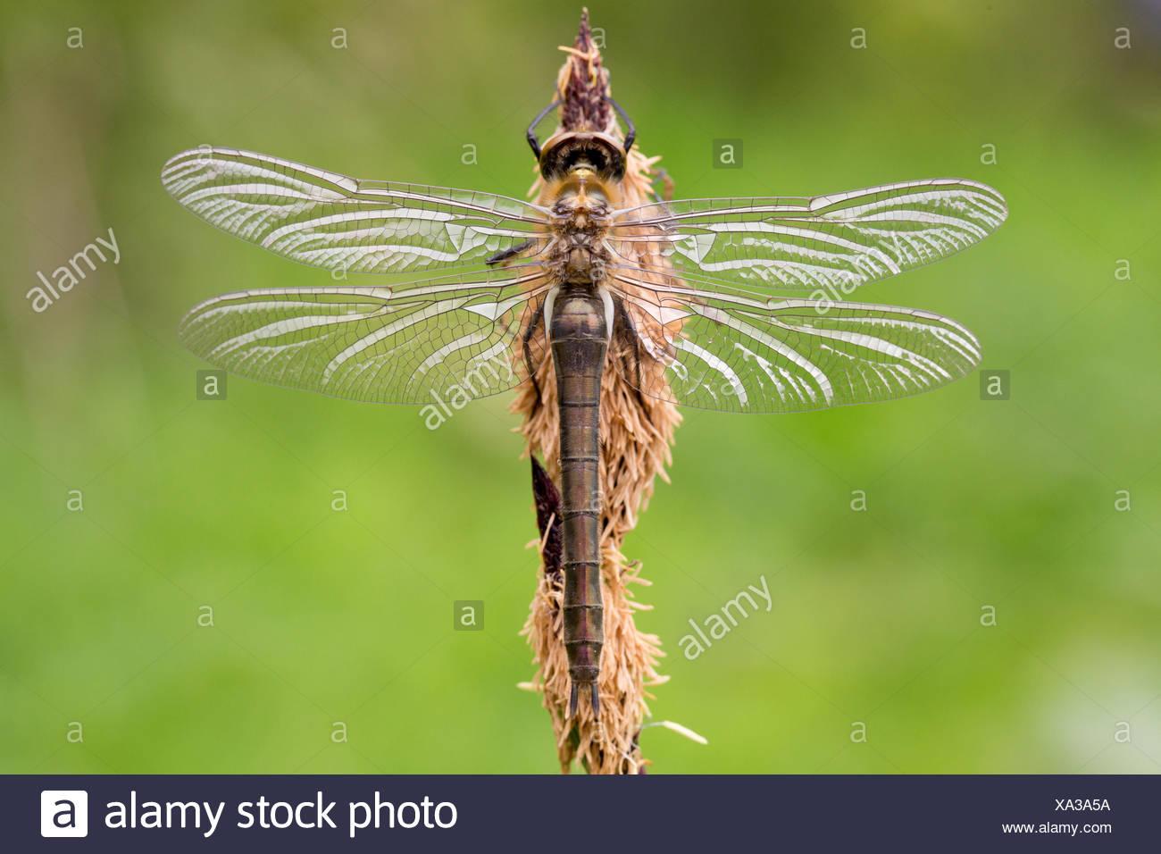 76+ Gambar Alam Flora Dan Fauna Terbaik