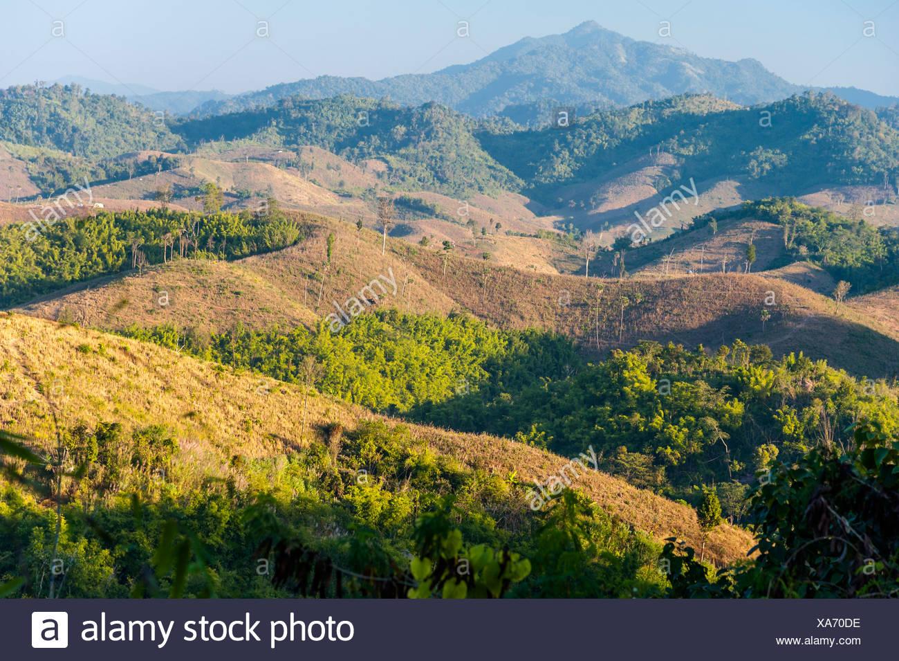 Paisaje, cosechan los campos de maíz, bosques de bambú, en el norte de Tailandia, Tailandia, Asia Imagen De Stock