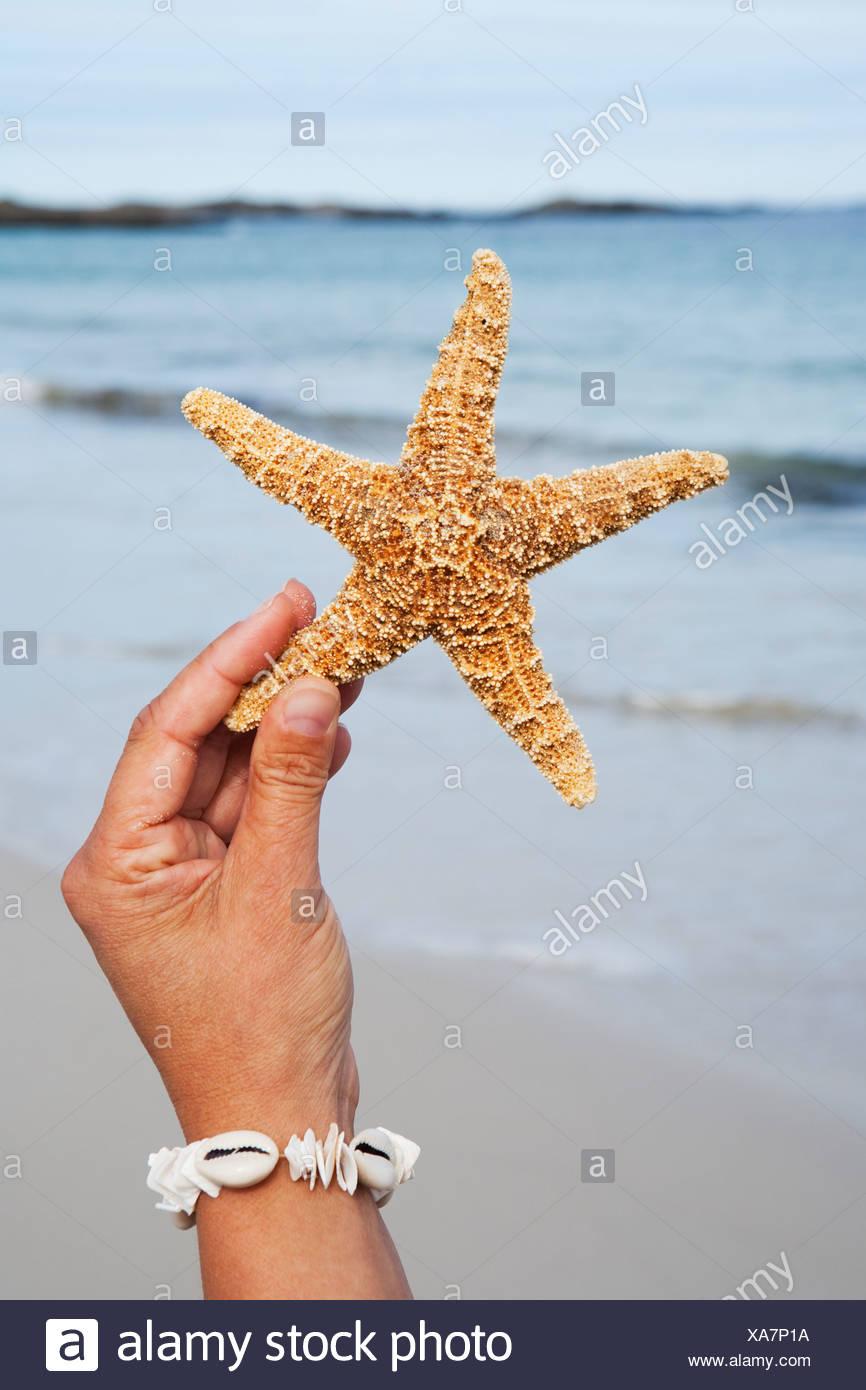 Las personas mano sujetando starfish en la playa Foto de stock