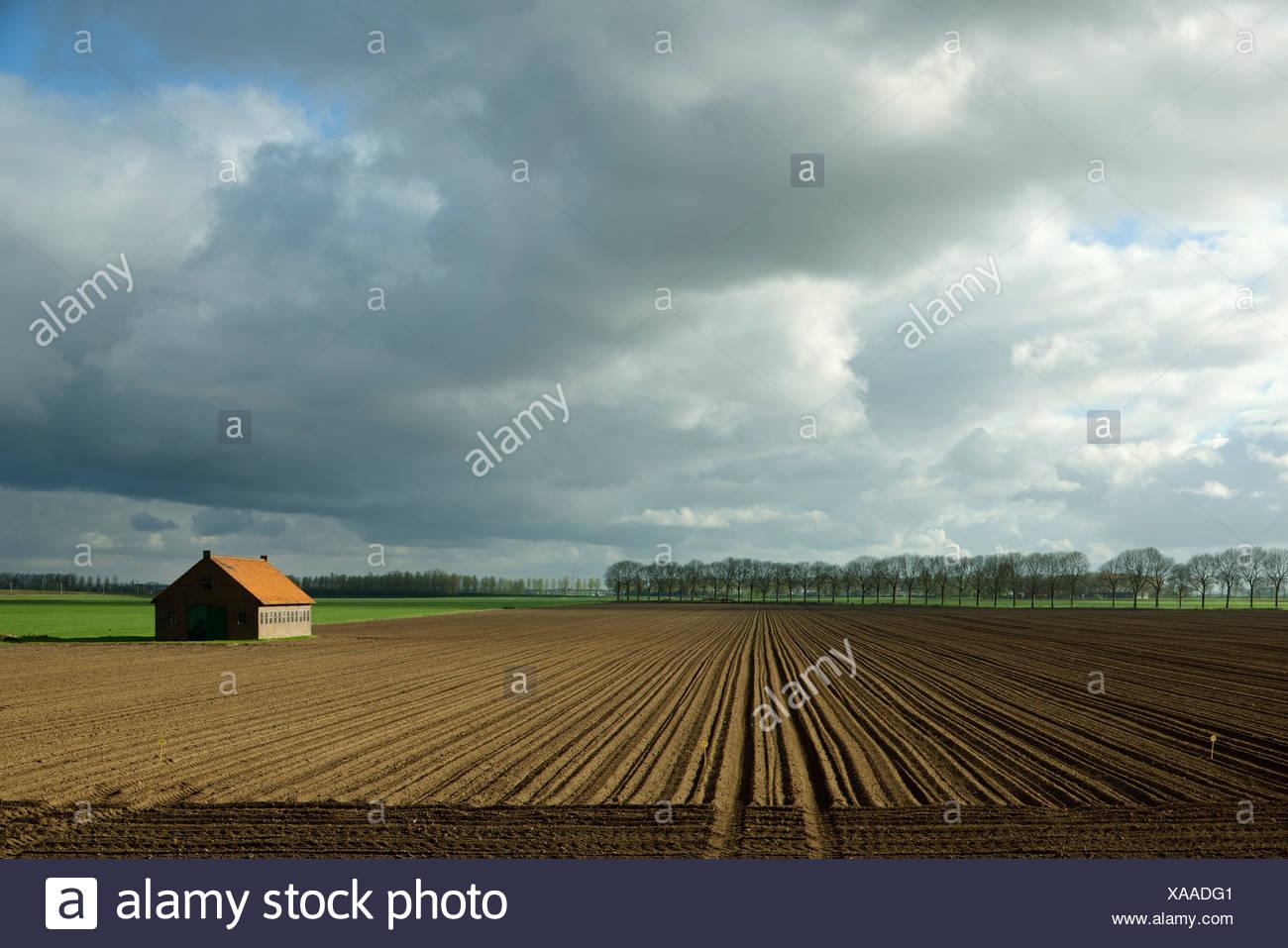 Los árboles que crecen en el borde del campo seco Imagen De Stock