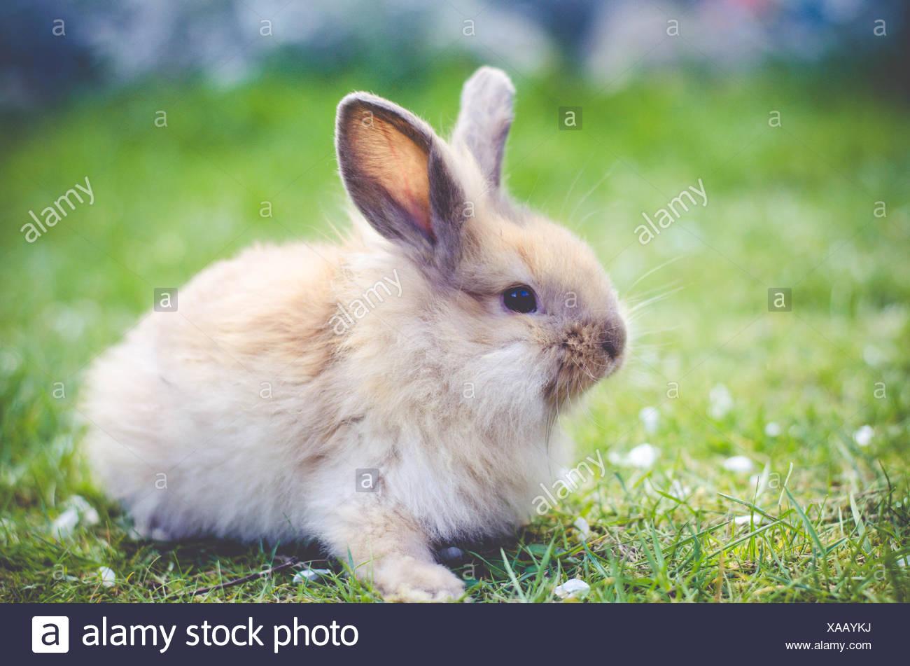 Conejo sentado sobre el césped Imagen De Stock