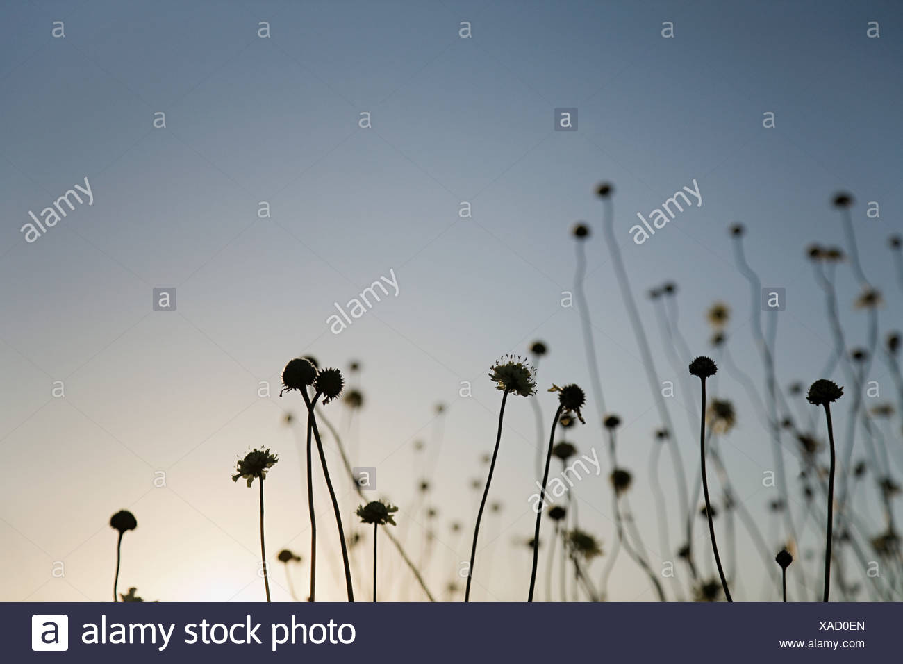Siluetas de las plantas al atardecer Imagen De Stock