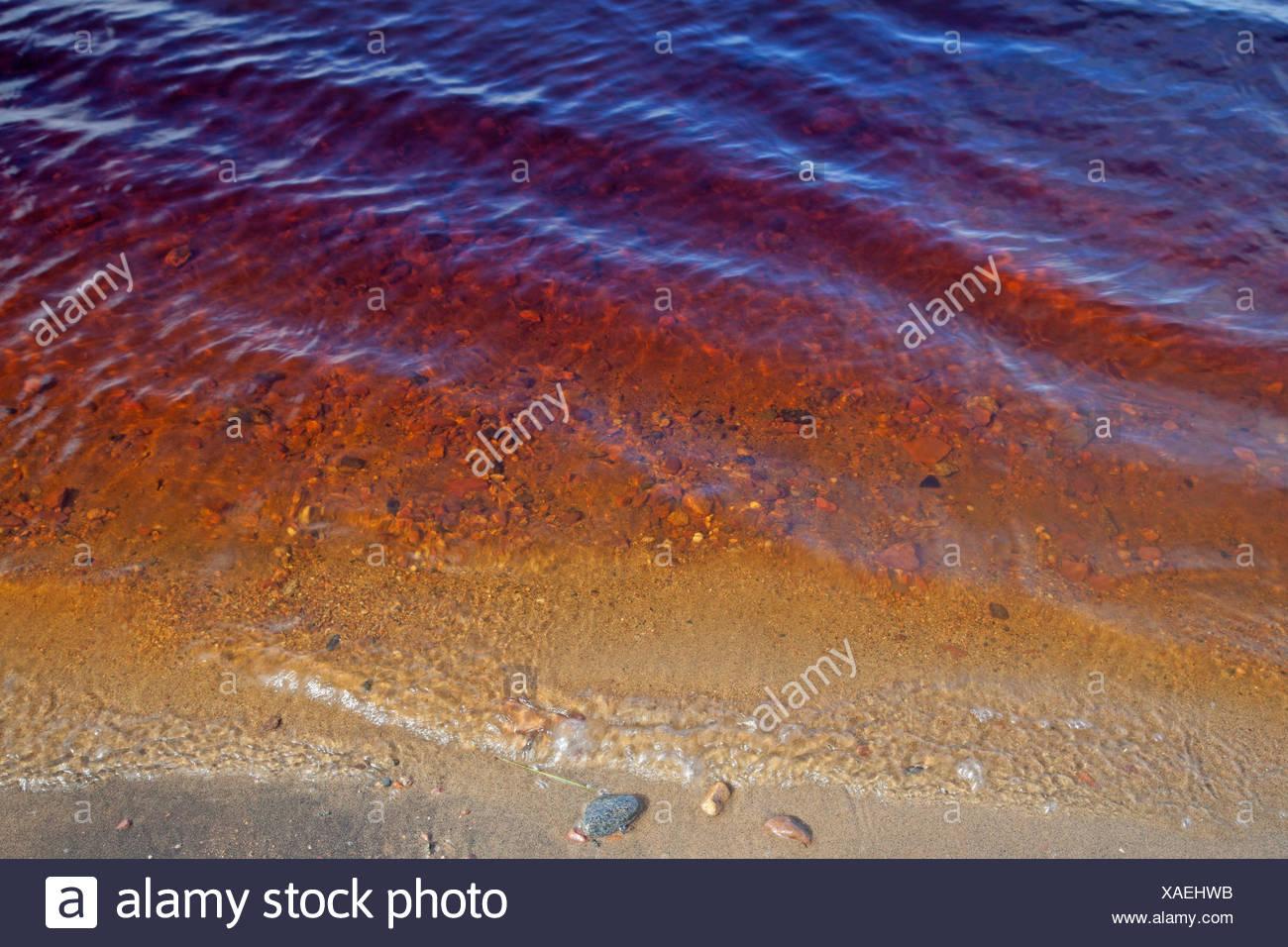 Agua rojiza de un río, Rusia, Kola, Río Varzuga Imagen De Stock