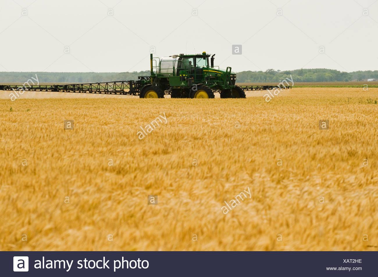 Una pulverizadora de alto despeje proporciona una aplicación de herbicidas químicos para madurar el trigo de invierno, cerca de Carey, Manitoba, Canadá Imagen De Stock
