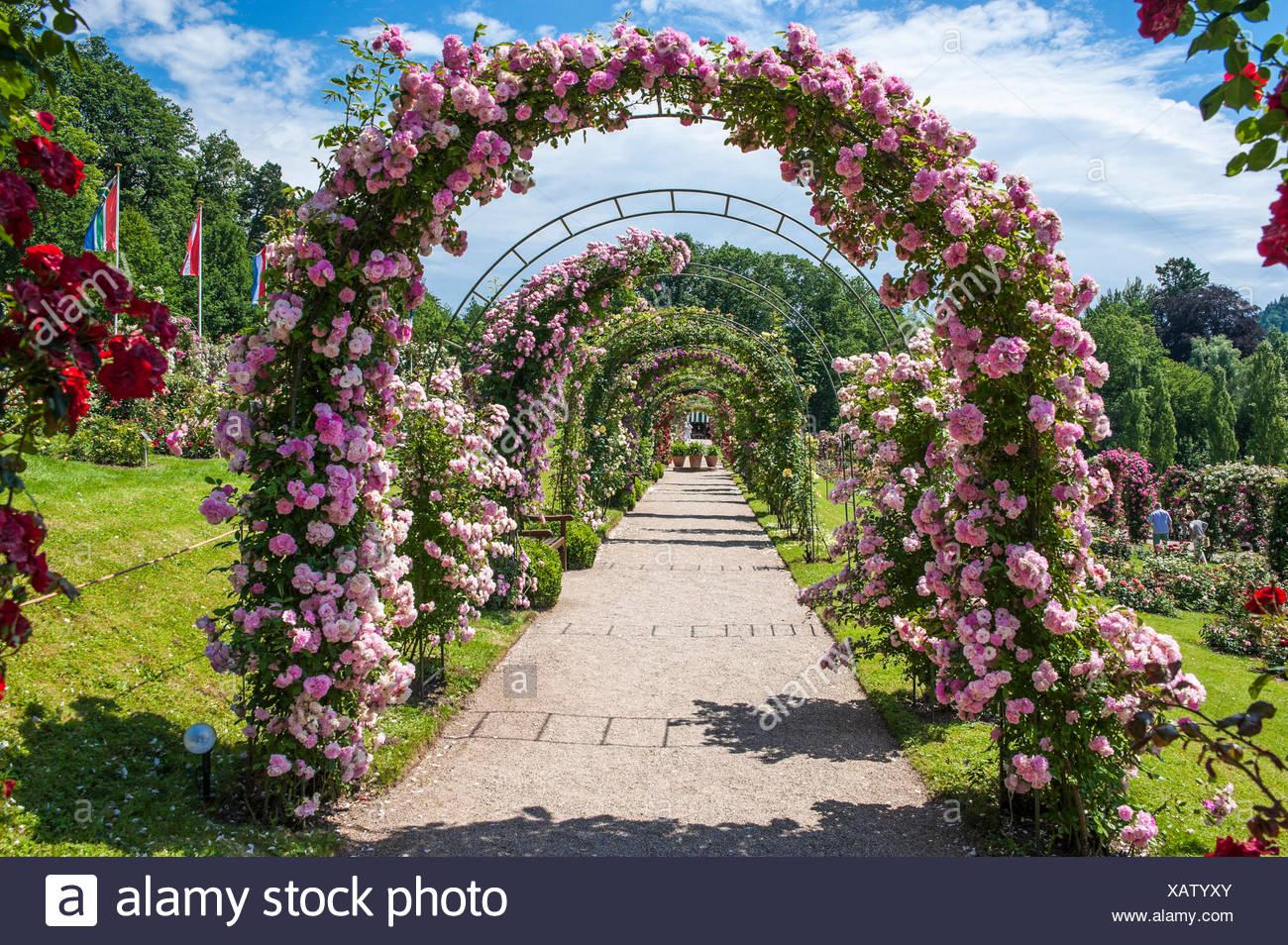 Arcos de rosas en el Jardín de Rosas, en Beutig ...