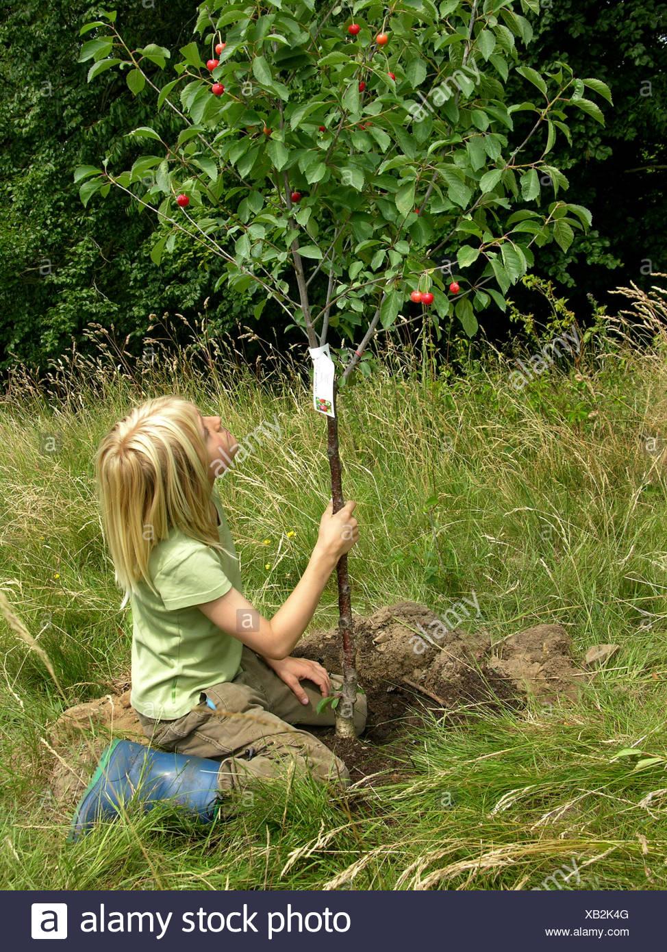 Joven está sentado en una pradera mirando el cerezo que acaba de plantado, Alemania Foto de stock