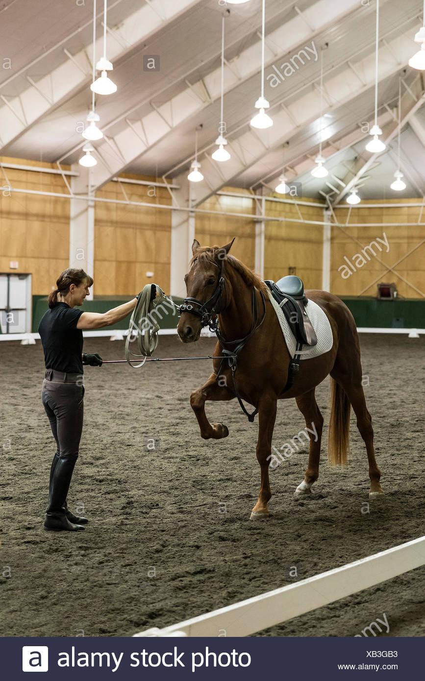 Pineland Farms Equestrian Center, New Gloucester, Maine, Estados Unidos. Imagen De Stock
