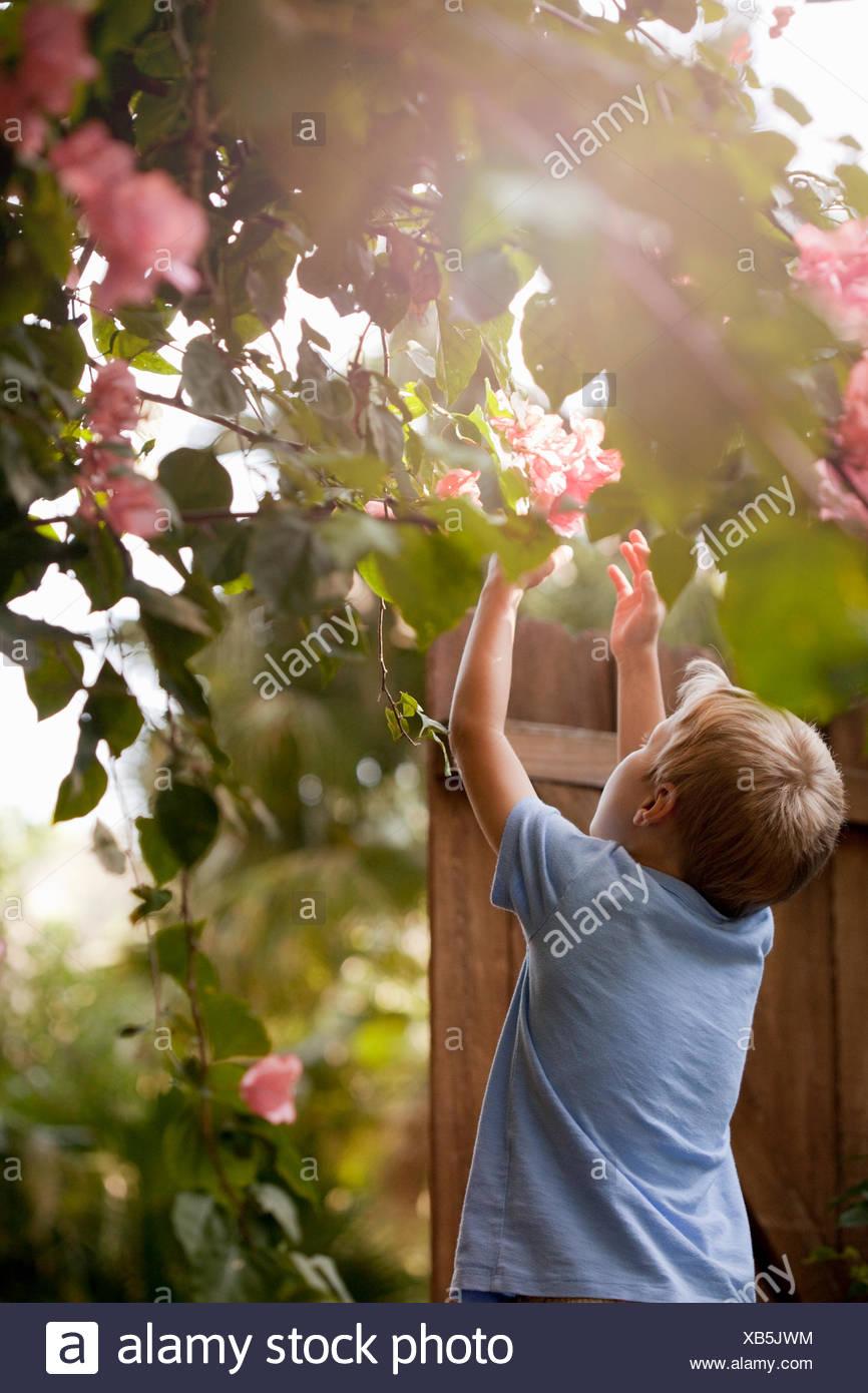 Un muchacho joven con jardín, llegando a tocar las flores, vista trasera Imagen De Stock