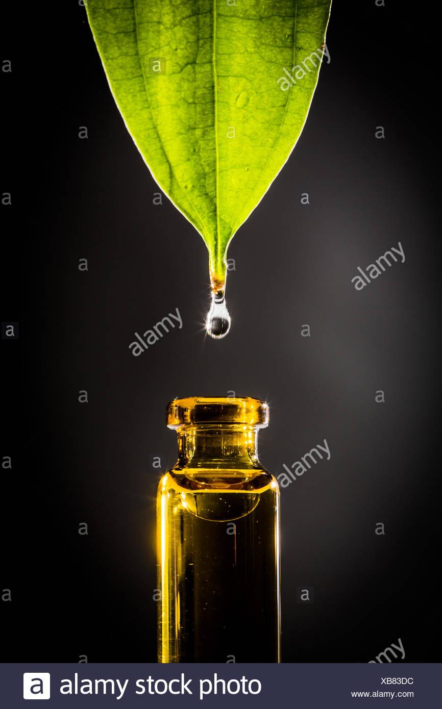 Concepto de fitoterapia. Imagen De Stock