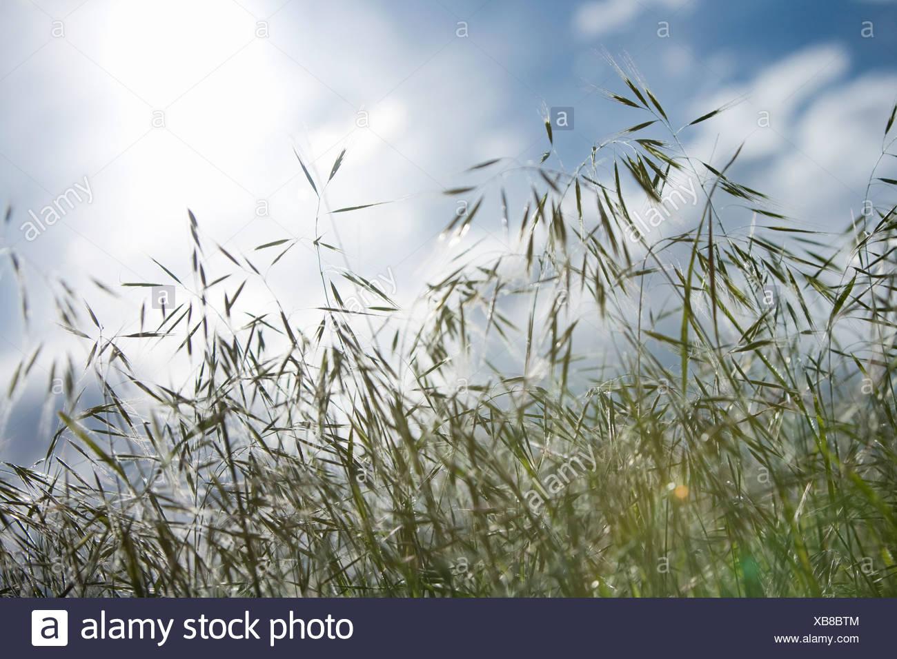 La hierba con el cielo Imagen De Stock