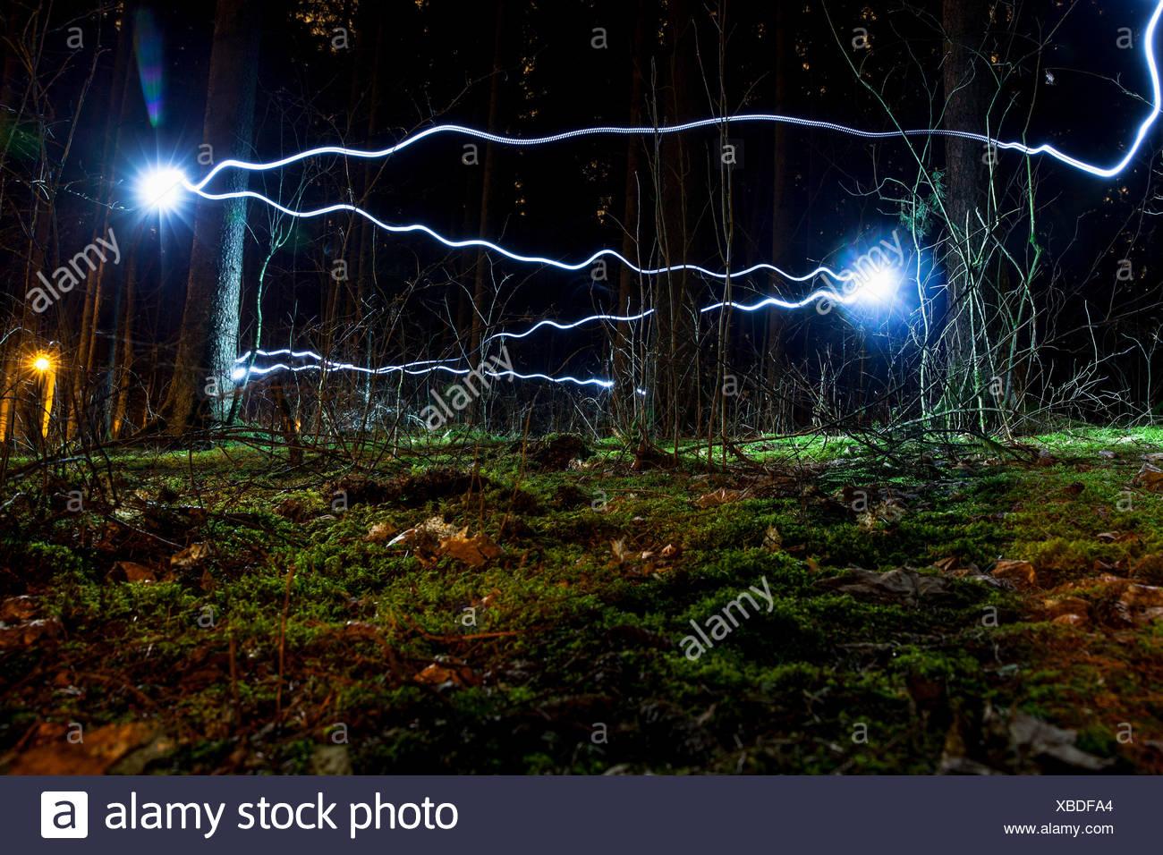 Luz azul senderos en el bosque Imagen De Stock