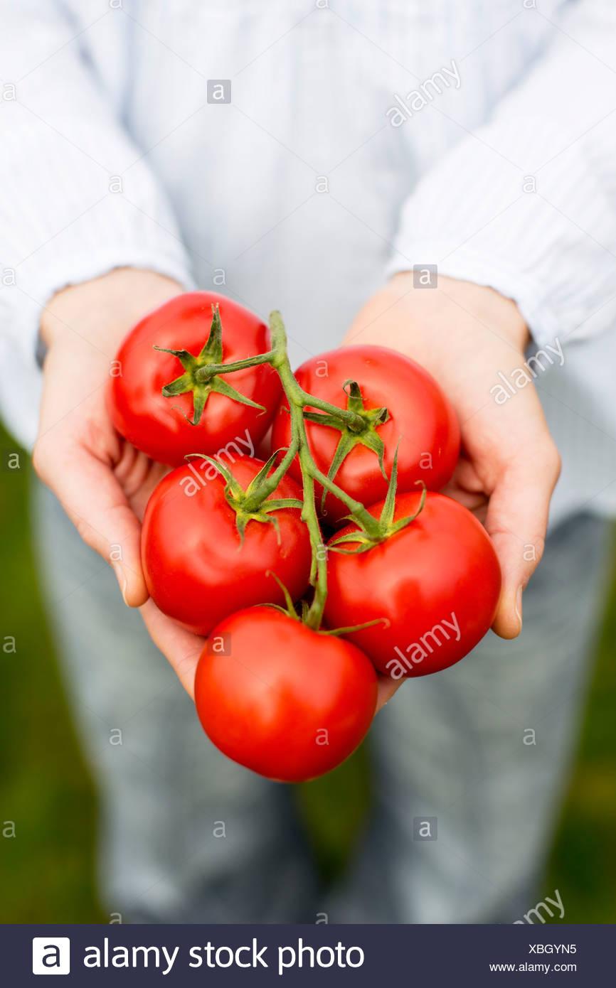 La mitad del torso de mujer sosteniendo los tomates Imagen De Stock