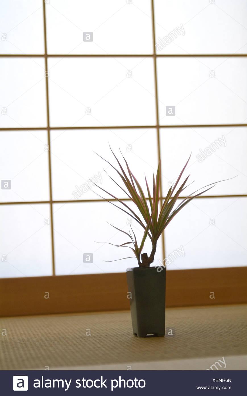 Plantas En Macetas Delante De La Puerta Corredera Foto Imagen De
