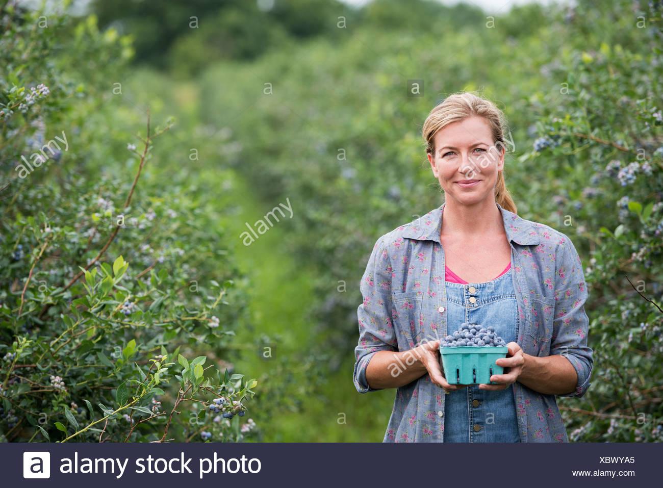 Una granja de frutas orgánicas. Una mujer recogiendo las bayas de los arbustos. Imagen De Stock