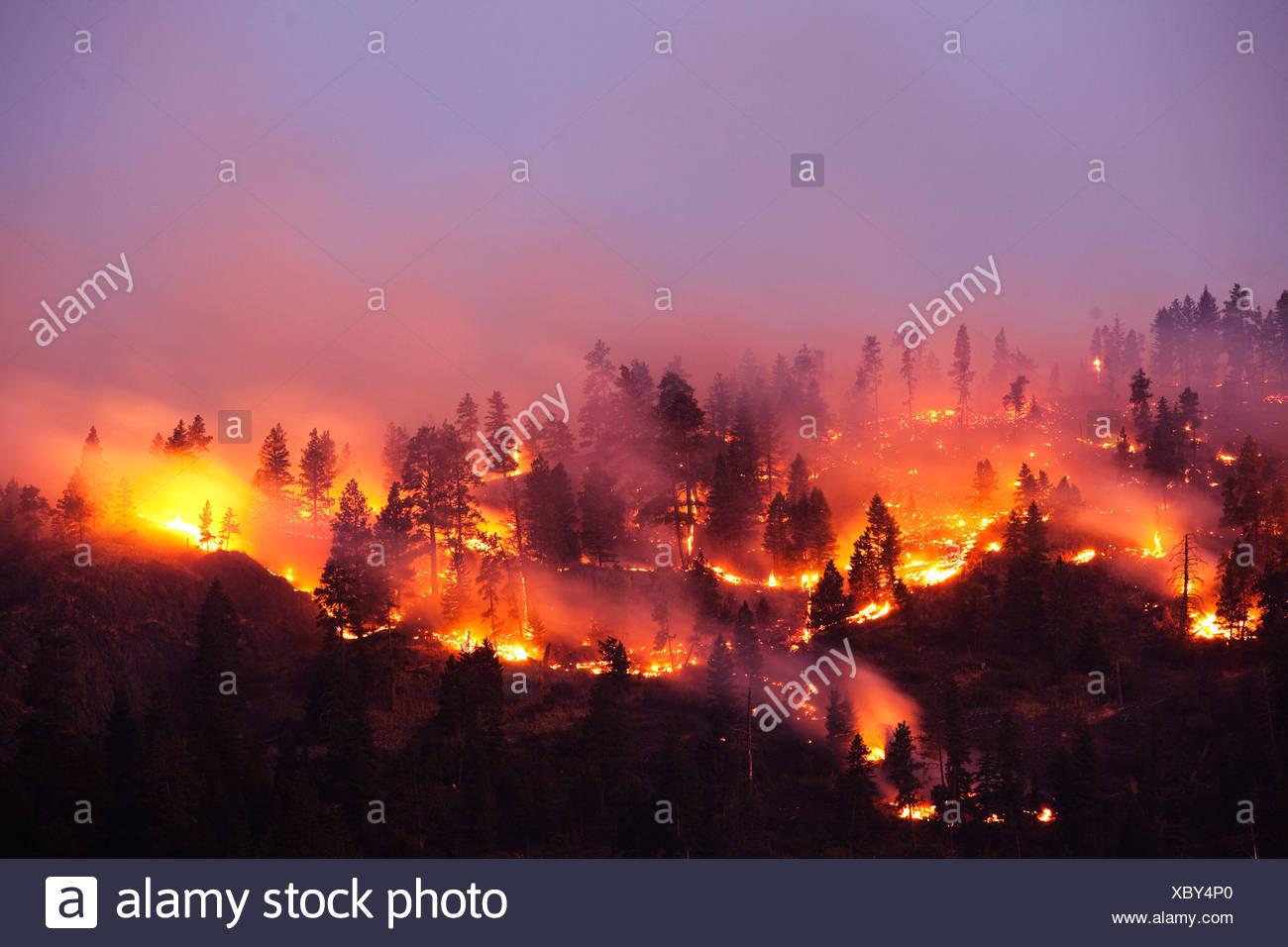 Un frondoso fuego ardiendo al lado de una montaña, en Montana. Imagen De Stock