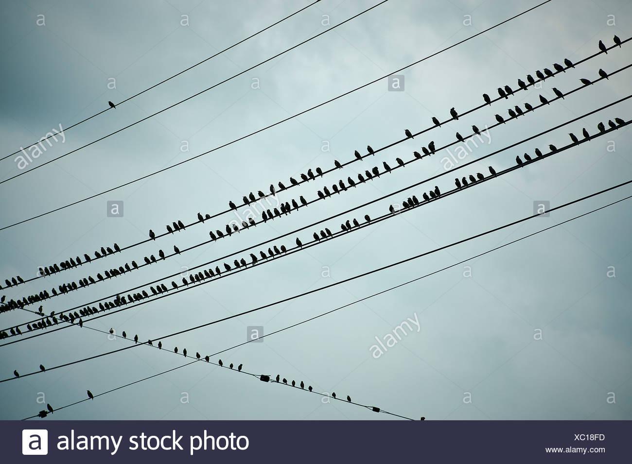 Pájaros en un cable. Foto de stock