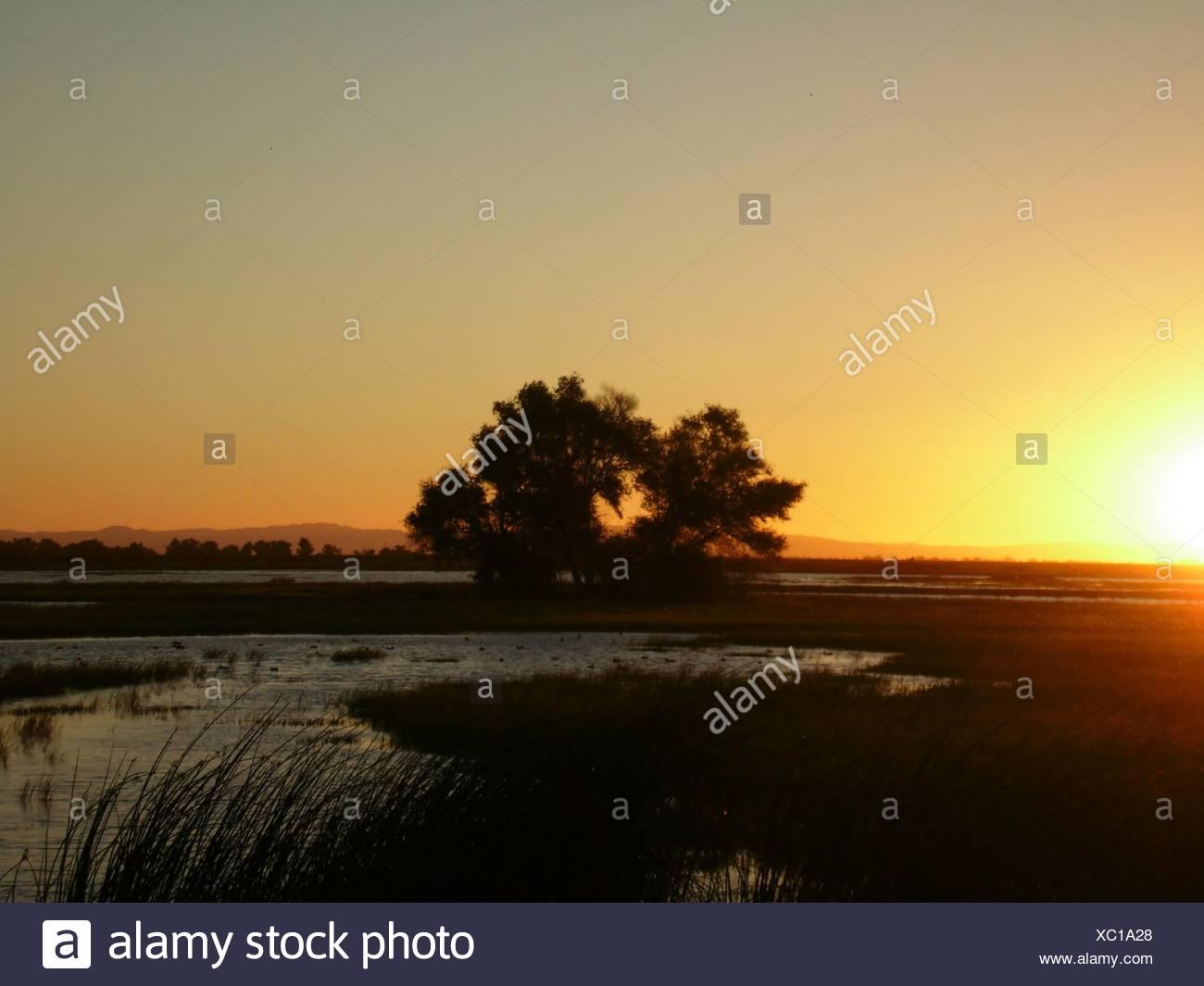 Árboles en campo contra el cielo del atardecer Foto de stock