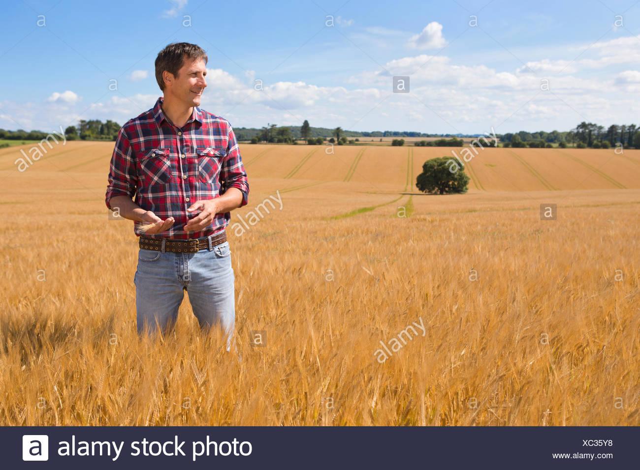 Apartar la mirada agricultor rural en un soleado día de campo de cultivos de cebada en verano Imagen De Stock