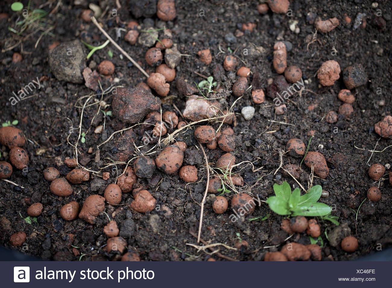 Arcilla expandida agregado sobre tierra de jardin. leca, guijarro, natural de barro. Imagen De Stock