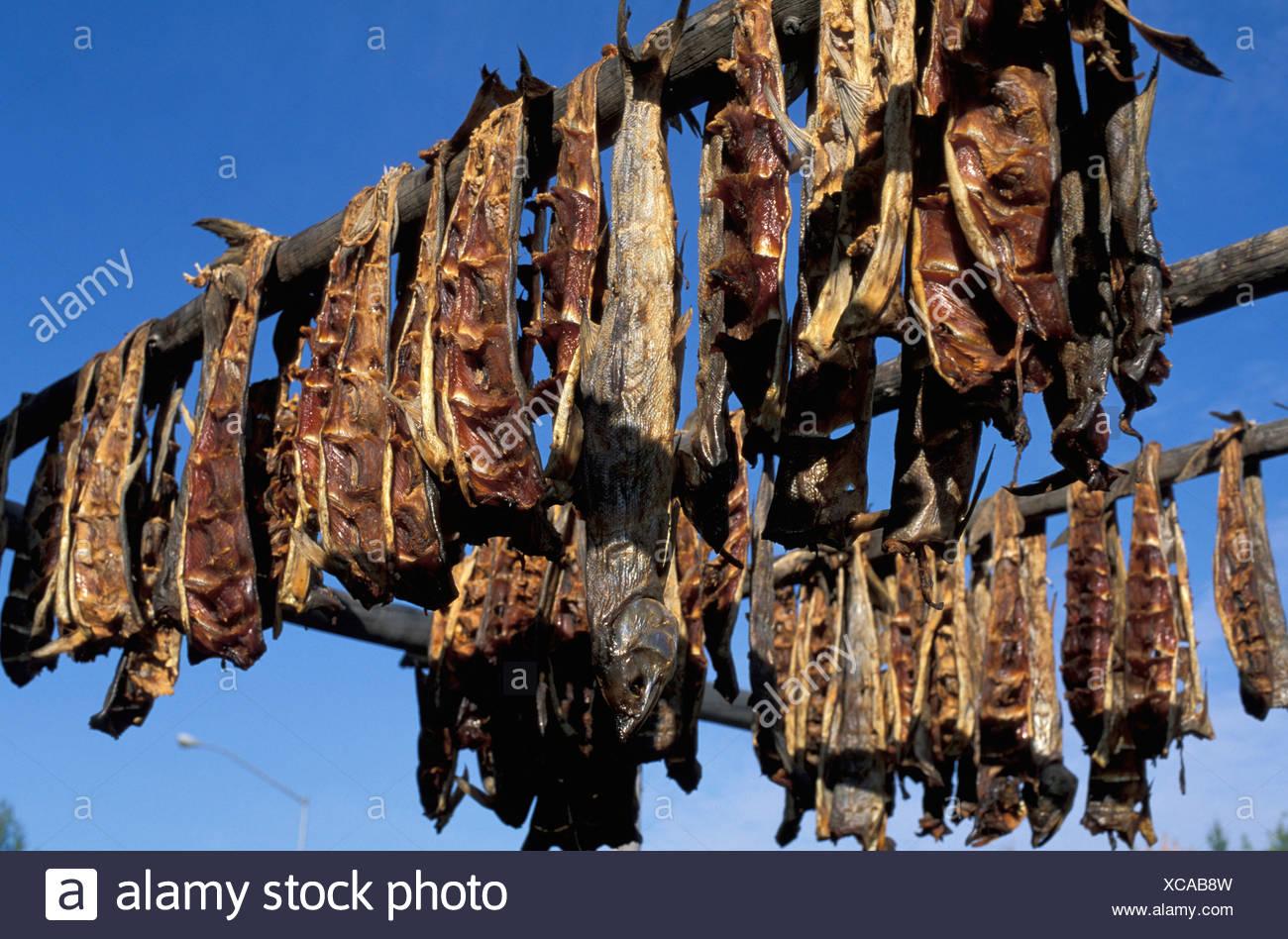 Peces hendidos, Fur Hunde, Nenana, Alaska, EE.UU., pescado, pescado ahumado, cielo azul, la muerte, la luz del sol, secos, humo Imagen De Stock