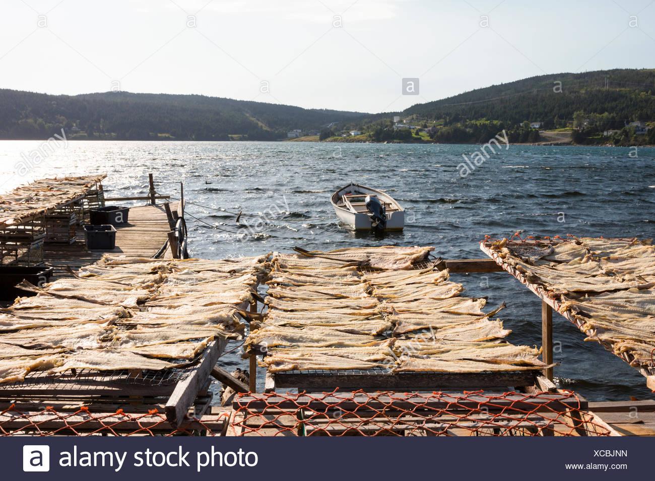 Cod tendederos, Corazón Contento, Newfoundland, Canadá Foto de stock