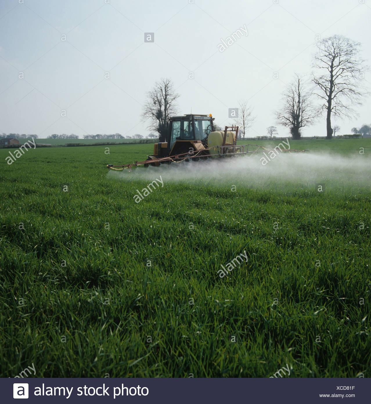 Spray sentado en la parte superior de un joven cosecha de cebada después de que el tractor y el remolque en una mañana Imagen De Stock
