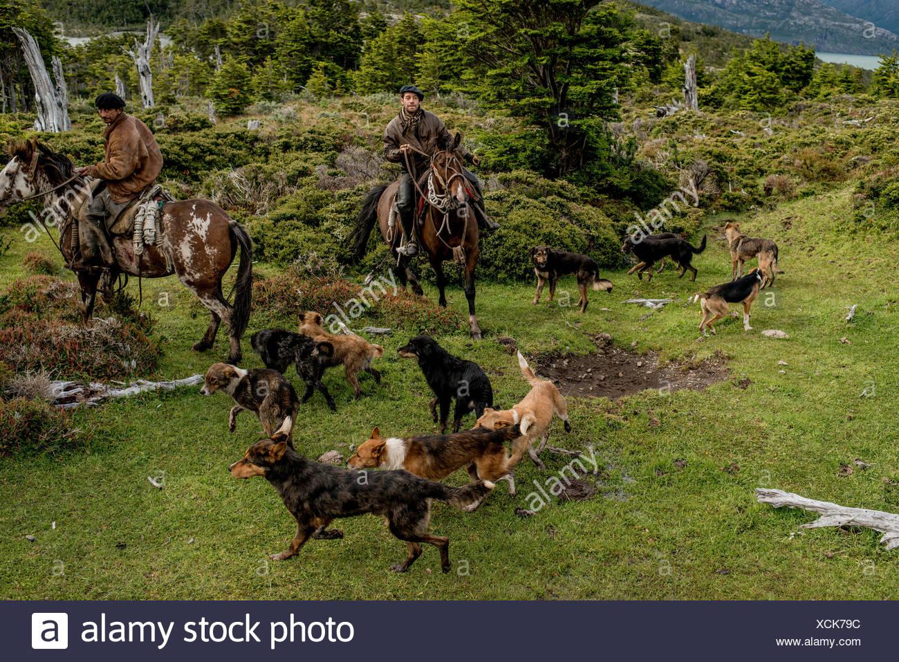 Bagualeros, vaqueros que capturar animales salvajes, en una expedición con sus perros. Imagen De Stock