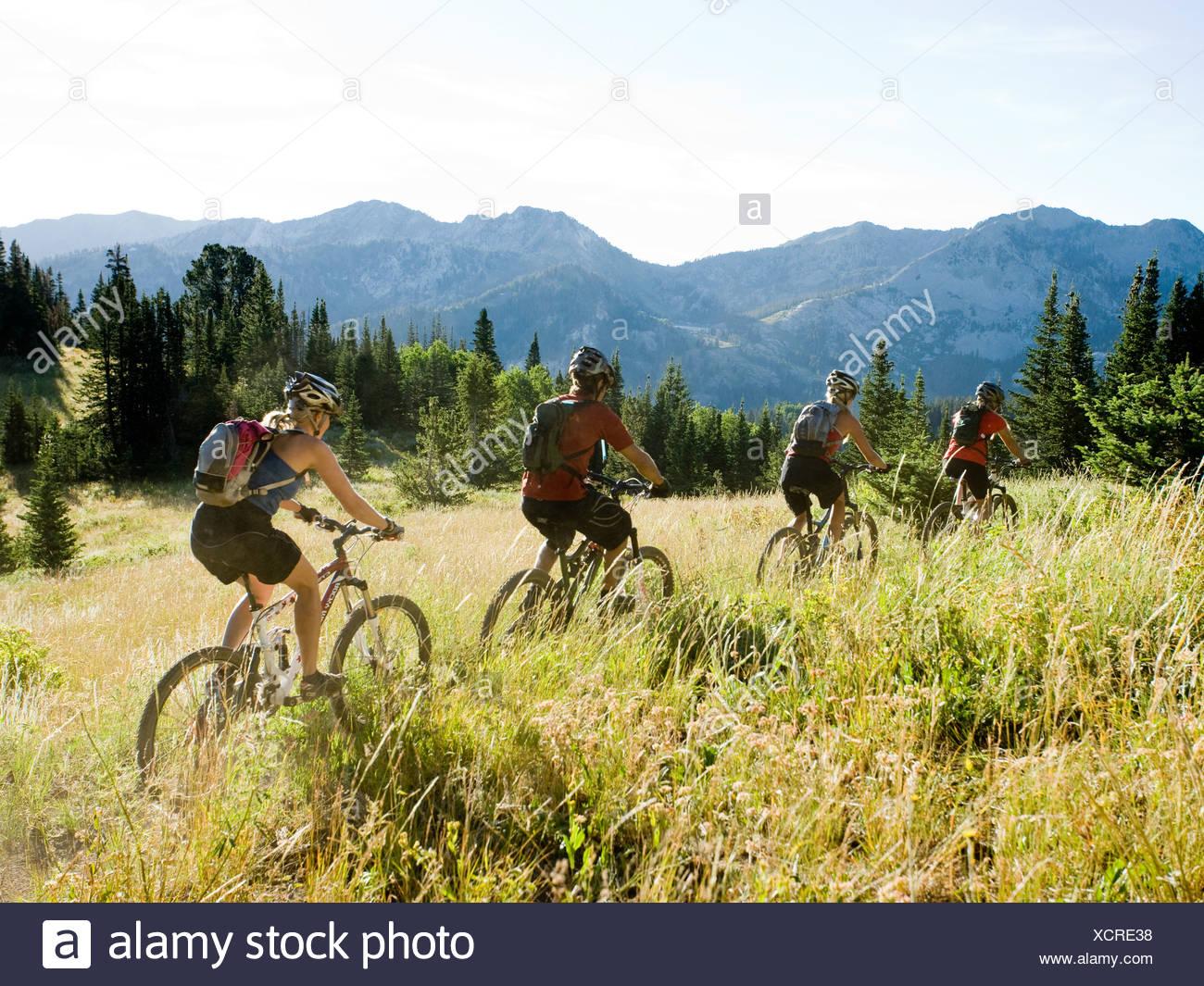 Los ciclistas de montaña montar abajo de un rastro Imagen De Stock