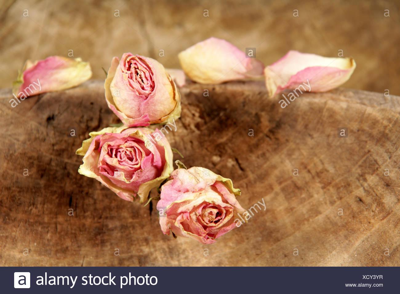 Nostalgia rosas bodegón Imagen De Stock