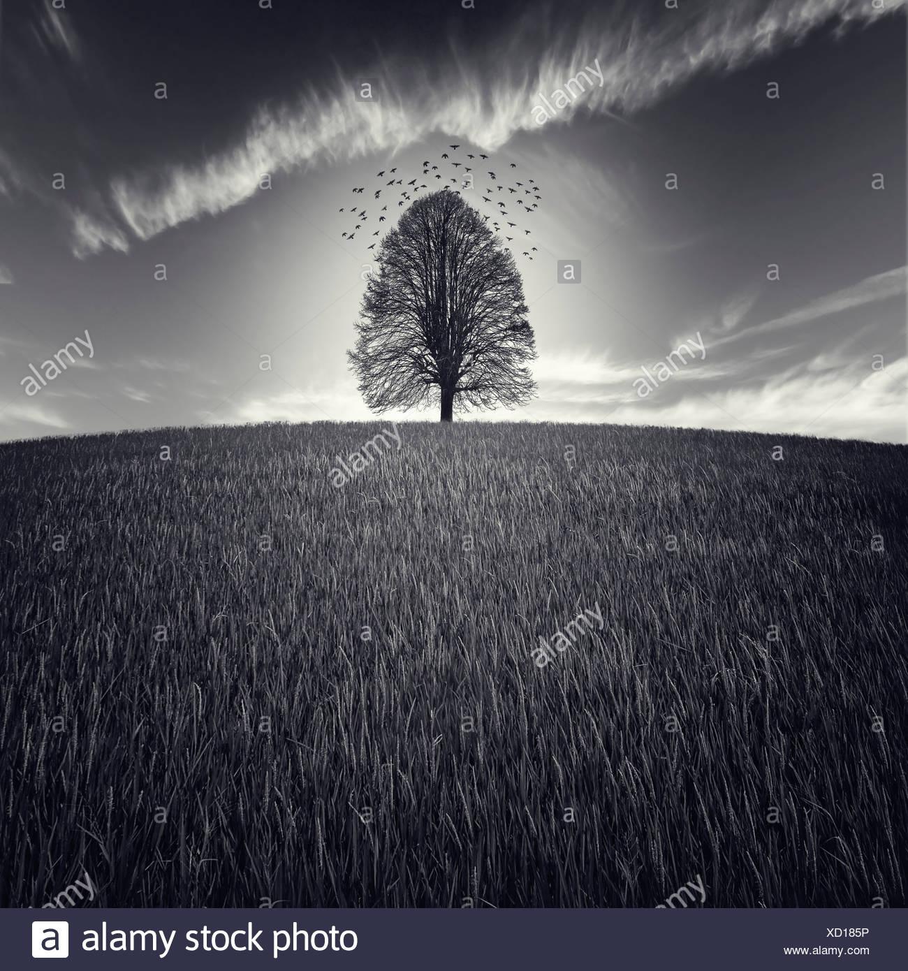 Un solo árbol en un gran campo con aves volando en el cielo Imagen De Stock