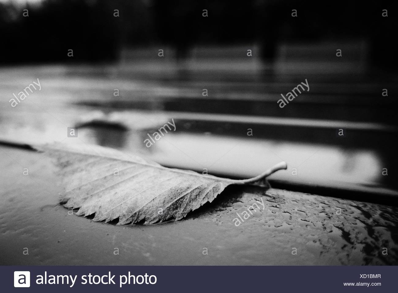Primer plano de la hoja en Carretera mojada Imagen De Stock