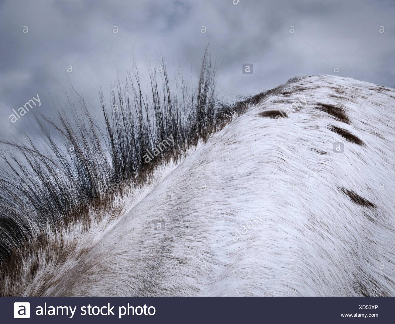 Cerca de melena del caballo Imagen De Stock