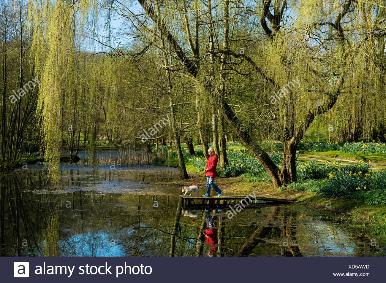 Una mujer y un perro en un embarcadero sobre un lago, bajo un gran árbol de sauce llorón. Imagen De Stock