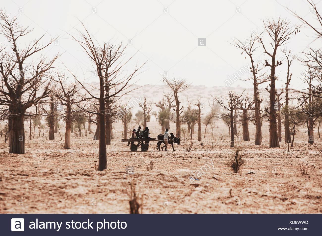 Los niños con un carro en stark paisaje con árboles, tierra Dogón, región de Mopti, Malí Foto de stock